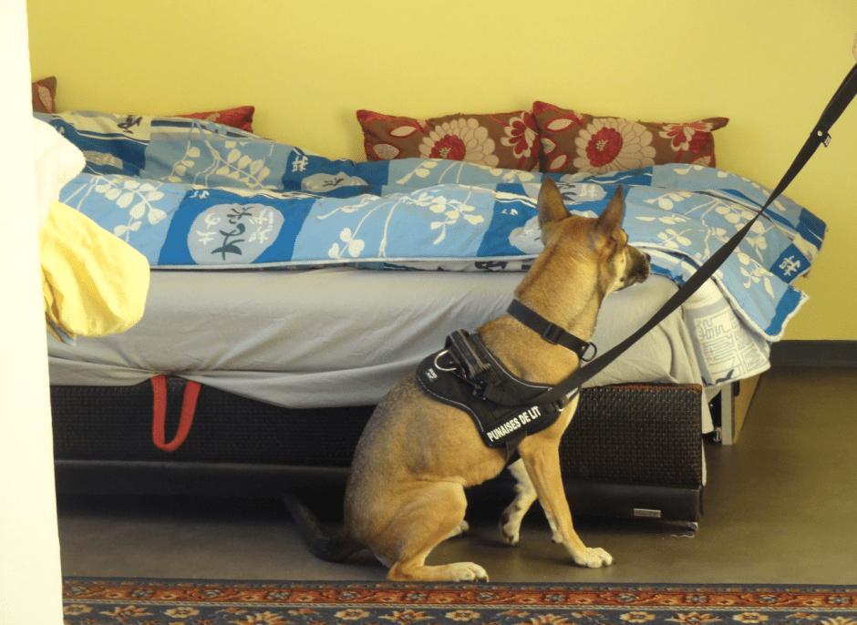 contre les punaises de lit lmh l che les chiens expressions. Black Bedroom Furniture Sets. Home Design Ideas